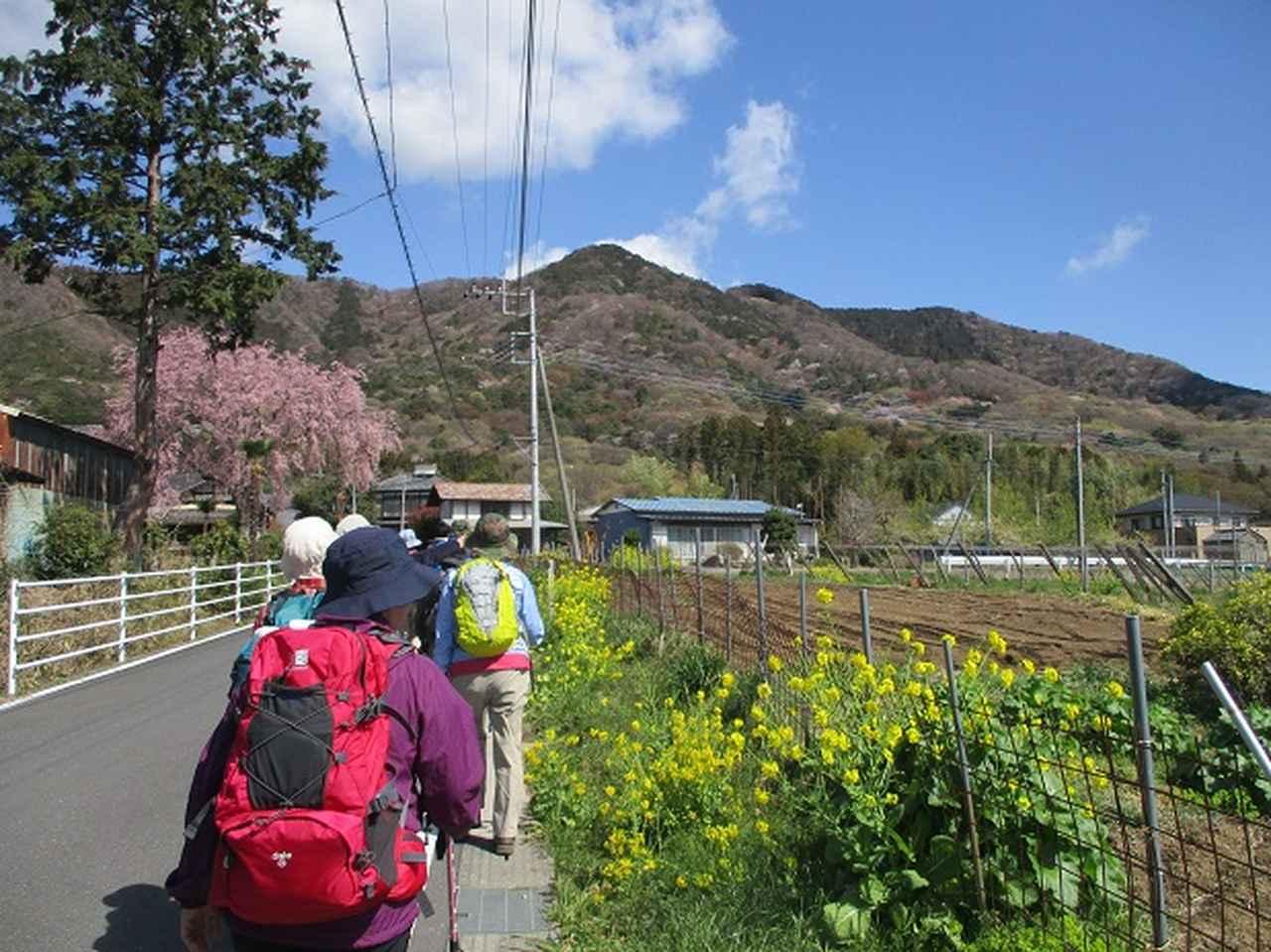 画像1: 4月9日に山旅会 晃石山から太平山 ツアーに行ってきました! にいって