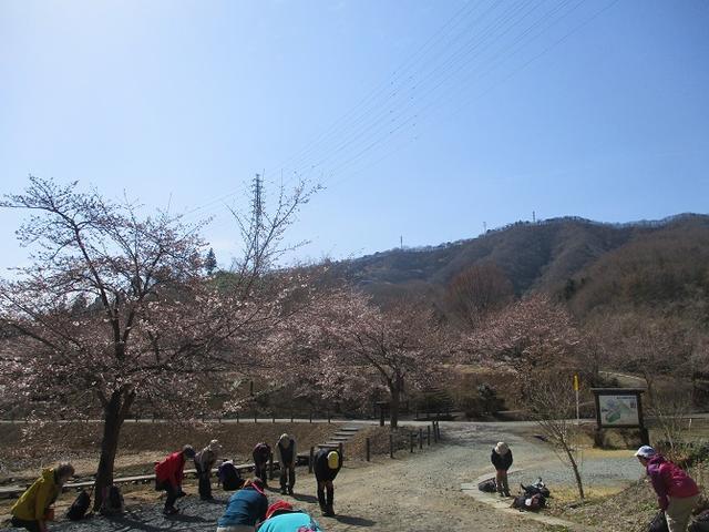 画像1: 4月5日に岡田ガイドのコースで群馬県の桜で有名な 「牛伏山」 へ行ってきました♪