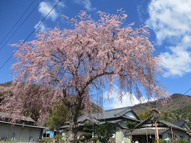 画像2: 4月9日に山旅会 晃石山から太平山 ツアーに行ってきました! にいって