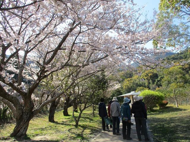 画像15: 本日は対馬・姫神山のツアー報告です!