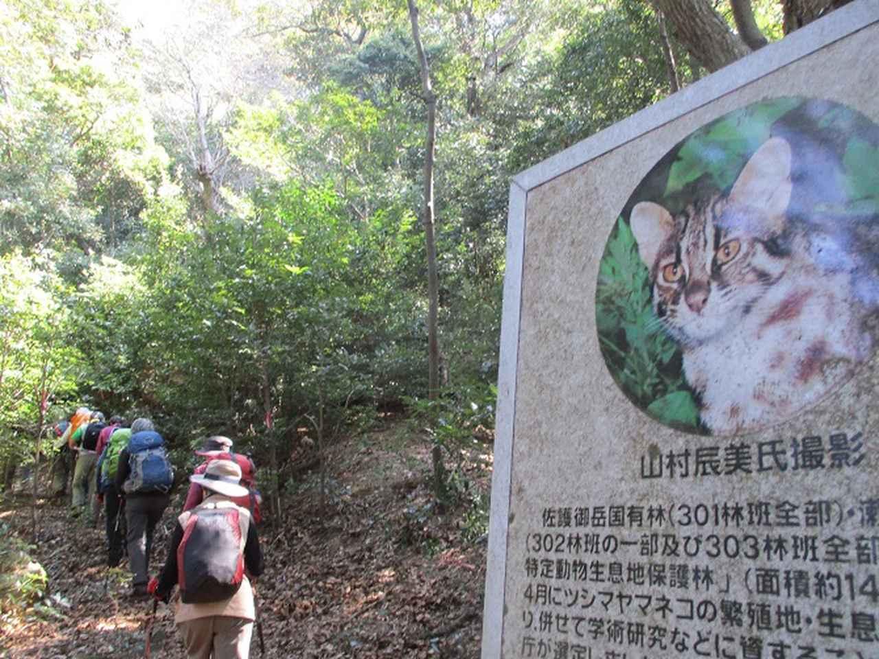 画像5: 【山旅会・登山ガイドこだわりツアー】添乗員からの便り・対馬の御岳へいってきました!
