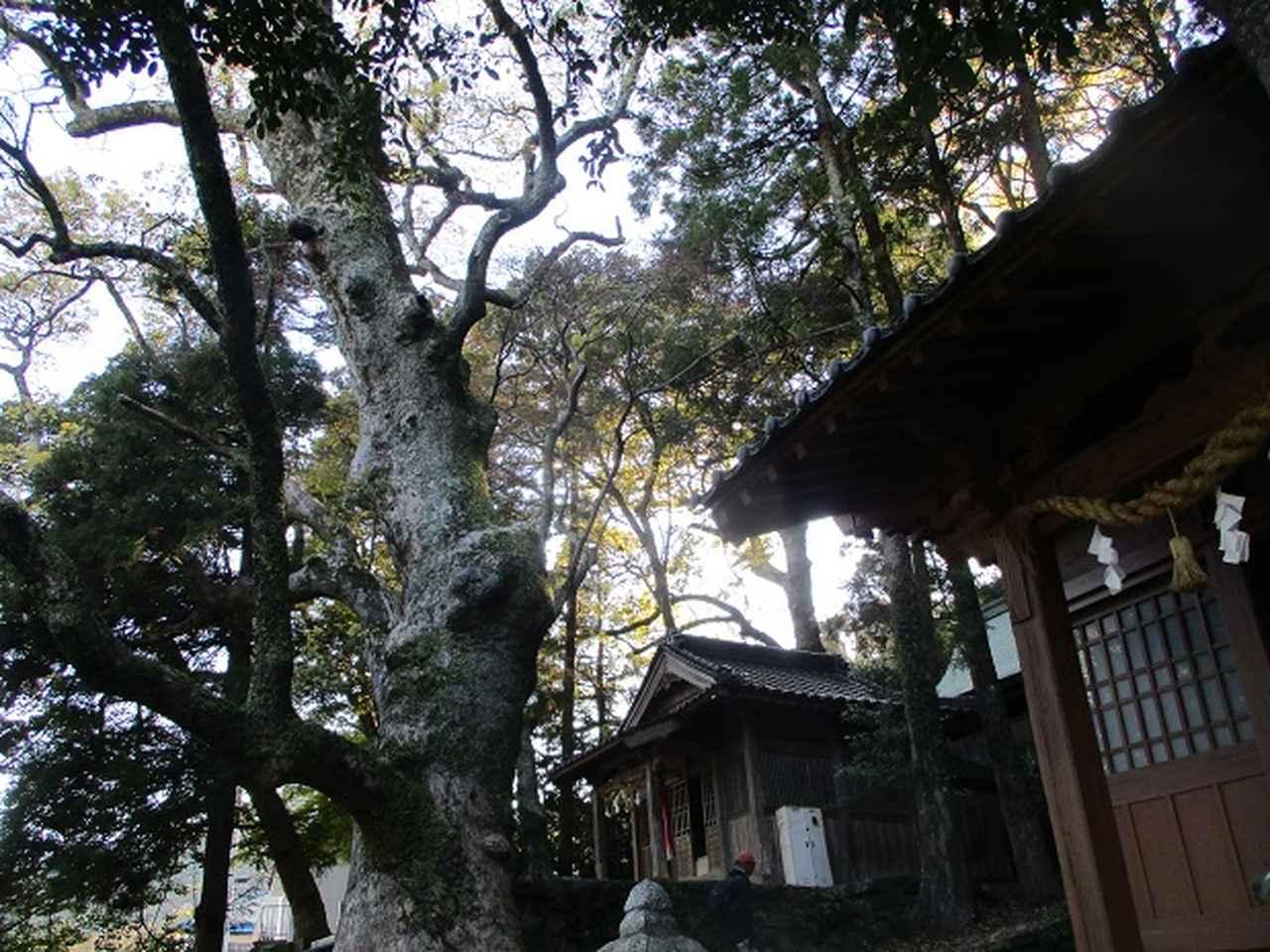 画像12: 【山旅会・登山ガイドこだわりツアー】添乗員からの便り・対馬の御岳へいってきました!