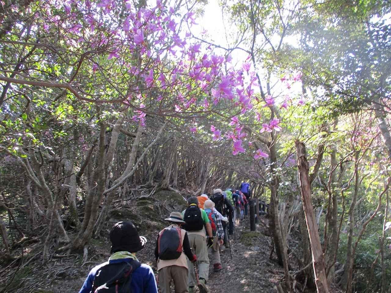 画像3: 【山旅会・登山ガイドこだわりツアー】添乗員からの便り・対馬の御岳へいってきました!