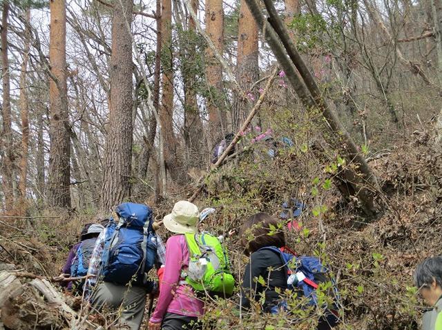 画像5: 4月17日に山旅会 百蔵(ももくら)山 のツアーに行ってきました!