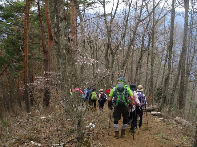 画像9: 4月17日に山旅会 百蔵(ももくら)山 のツアーに行ってきました!