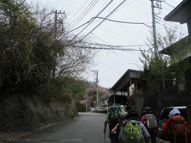 画像1: 4月17日に山旅会 百蔵(ももくら)山 のツアーに行ってきました!