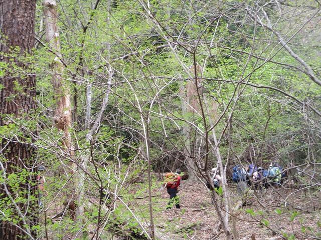 画像3: 4月17日に山旅会 百蔵(ももくら)山 のツアーに行ってきました!