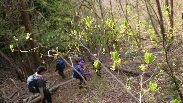 画像9: 4月6日に宮下ガイドと富岳十二景シリーズで 久鬼山 へ行ってきました♪
