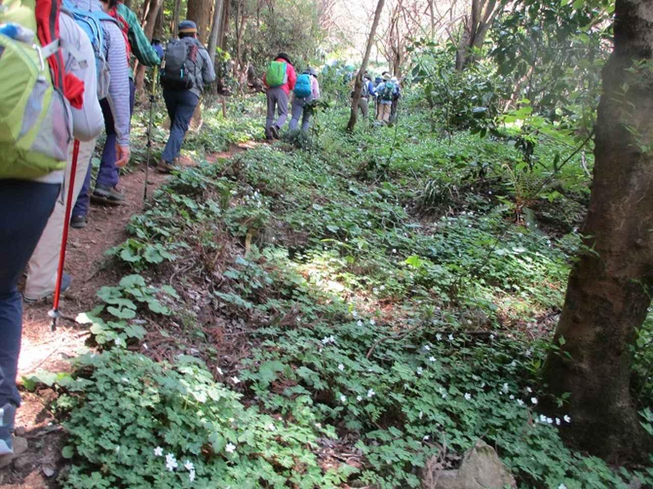 画像6: 4月20日に山旅会 「西山峠から草戸山」 ツアーに行ってきました!