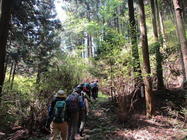 画像5: 4月20日に山旅会 「西山峠から草戸山」 ツアーに行ってきました!