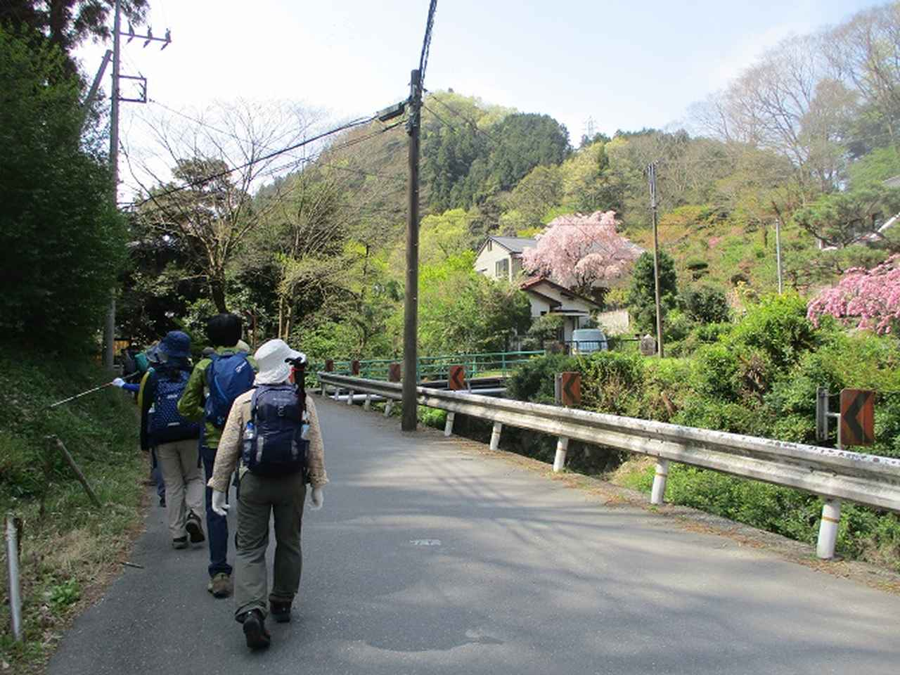 画像1: 4月20日に山旅会 「西山峠から草戸山」 ツアーに行ってきました!