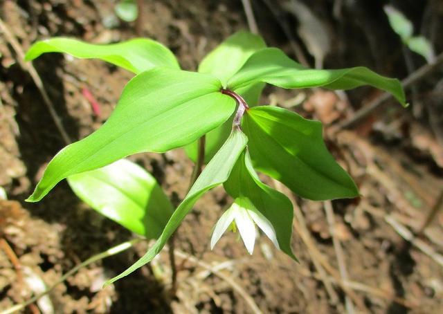 画像9: 4月20日に山旅会 「西山峠から草戸山」 ツアーに行ってきました!