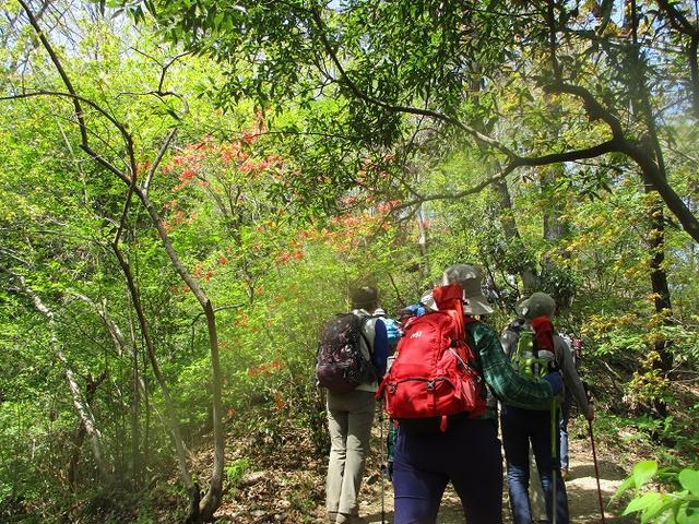 画像13: 4月20日に山旅会 「西山峠から草戸山」 ツアーに行ってきました!