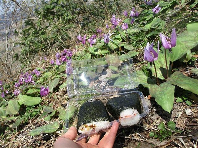 画像12: 4月15日に岡田ガイドとカタクリ咲く 六万騎山 へ行って来ました♪