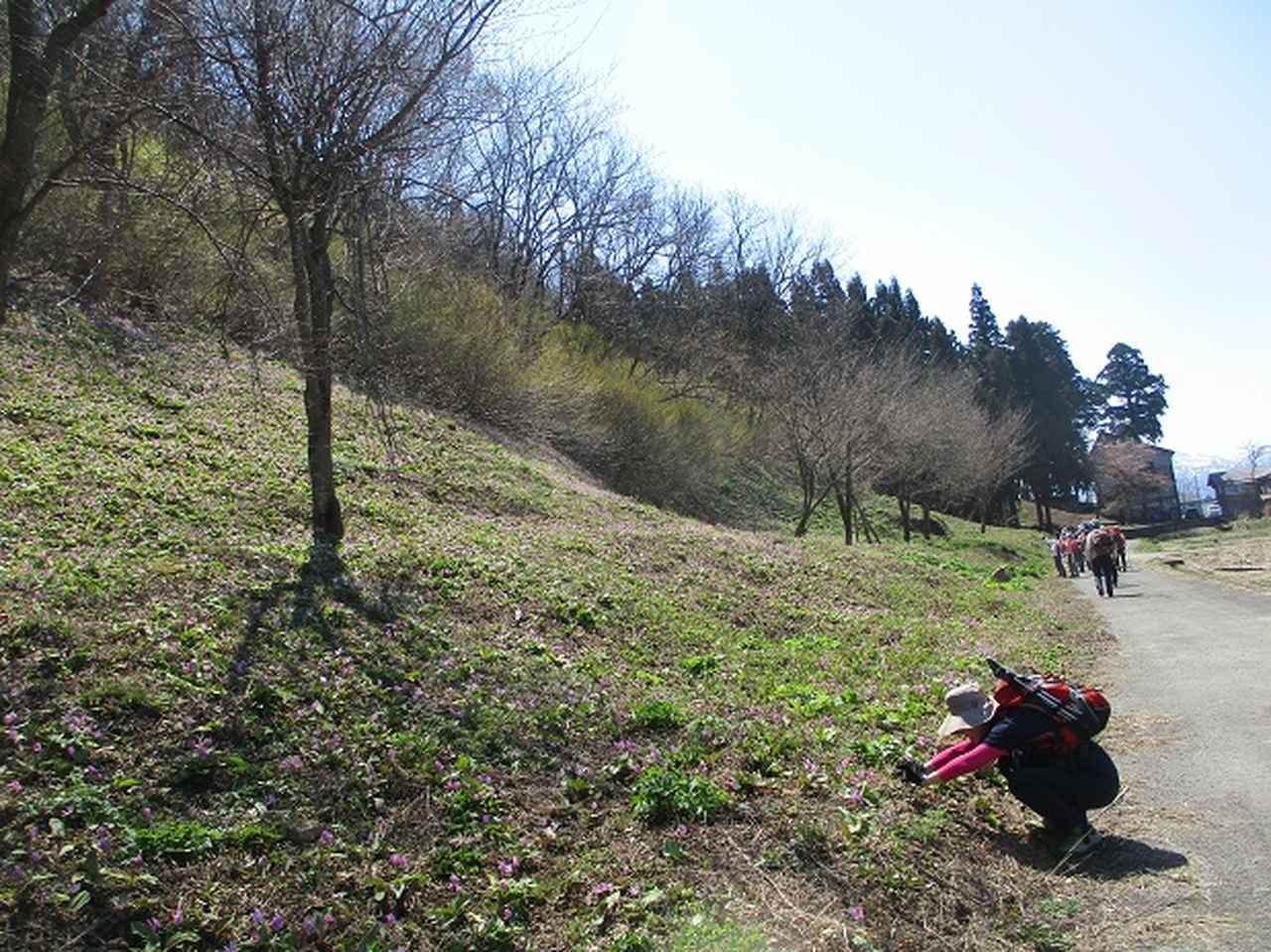 画像2: 4月15日に岡田ガイドとカタクリ咲く 六万騎山 へ行って来ました♪