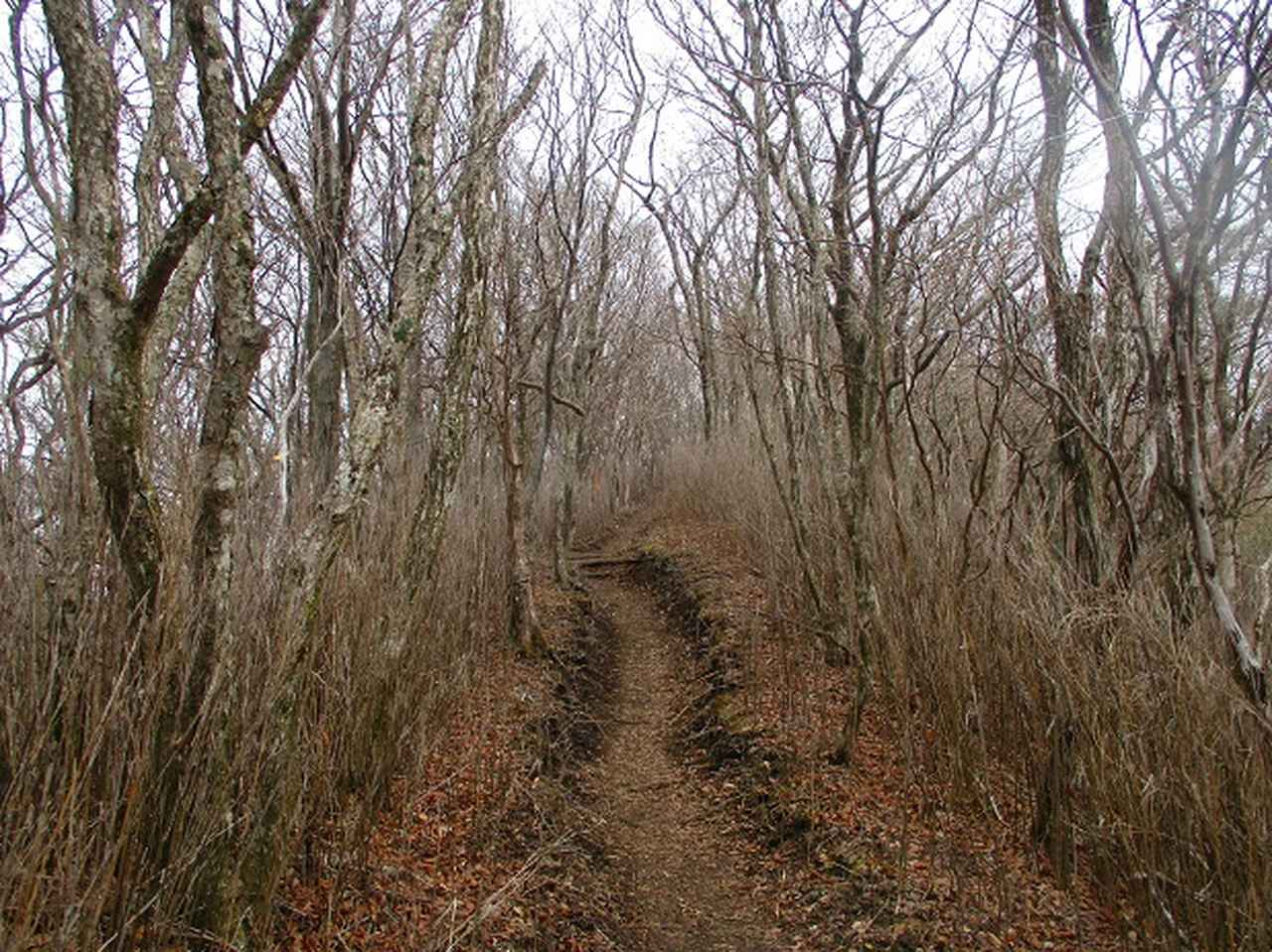 画像5: 来年の春の企画のネタを探して 九州・祖母山 に行ってきました!