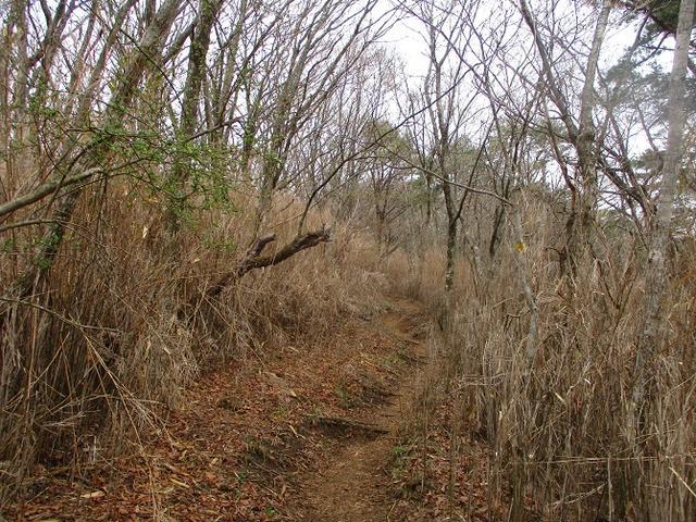 画像3: 来年の春の企画のネタを探して 九州・祖母山 に行ってきました!