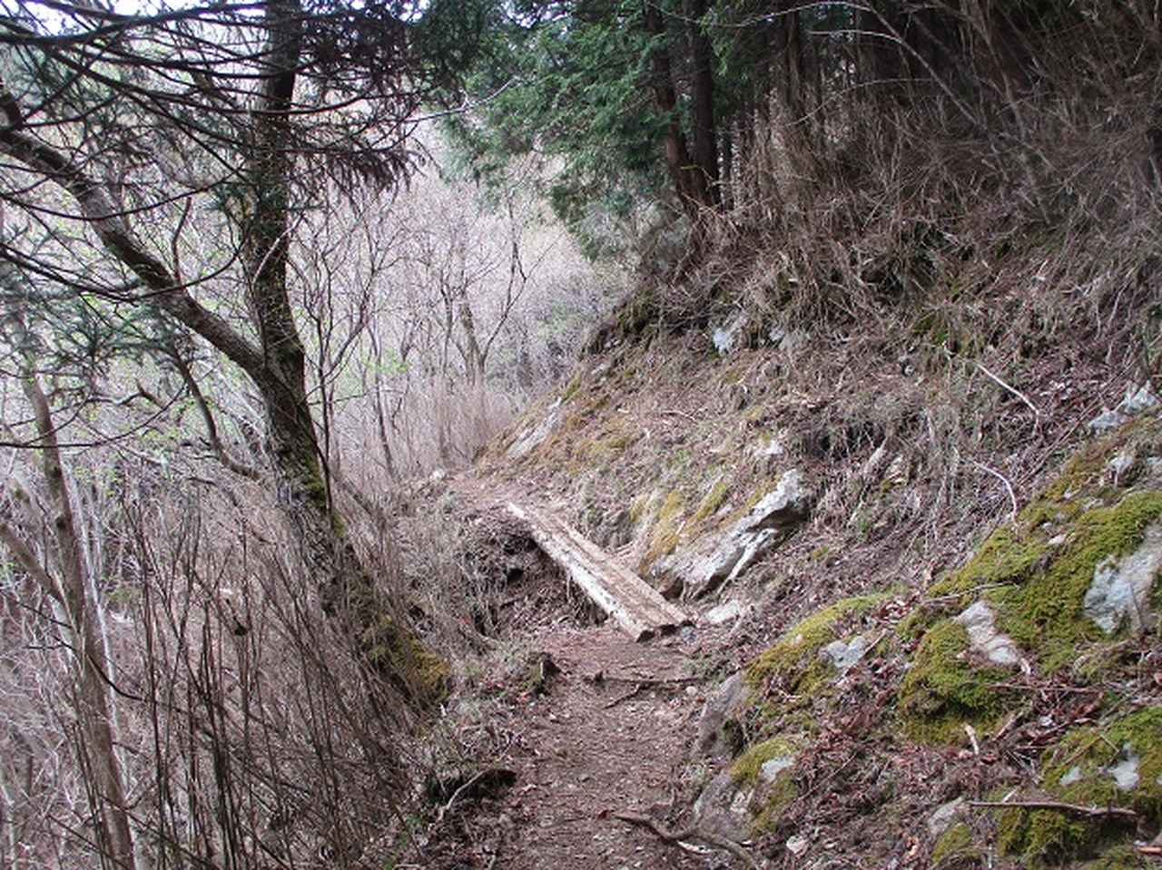 画像2: 来年の春の企画のネタを探して 九州・祖母山 に行ってきました!