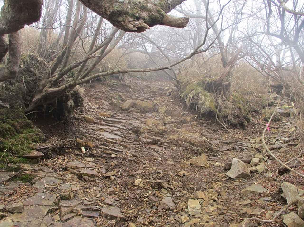 画像8: 来年の春の企画のネタを探して 九州・祖母山 に行ってきました!