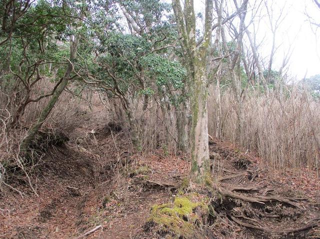 画像7: 来年の春の企画のネタを探して 九州・祖母山 に行ってきました!