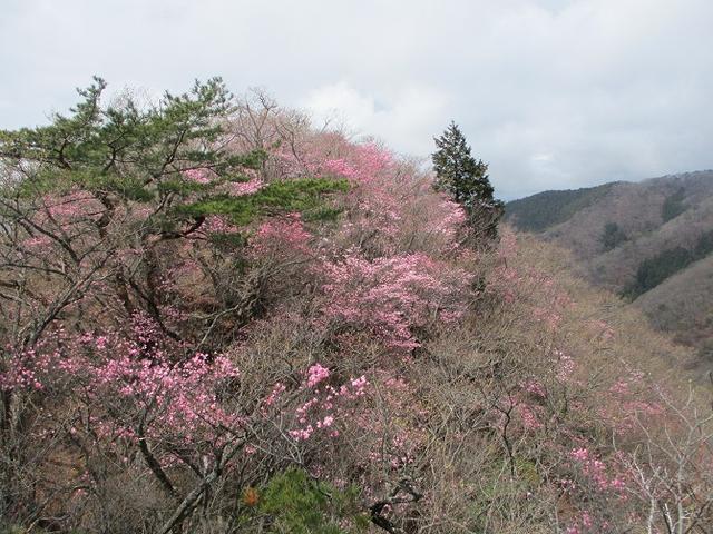 画像7: 4月25日に山旅会 「鳴神山」 ツアーに行ってきました!