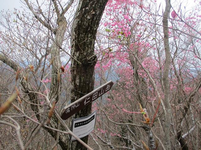 画像9: 4月25日に山旅会 「鳴神山」 ツアーに行ってきました!