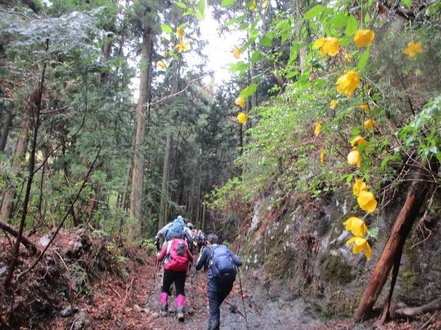 画像2: 4月25日に山旅会 「鳴神山」 ツアーに行ってきました!