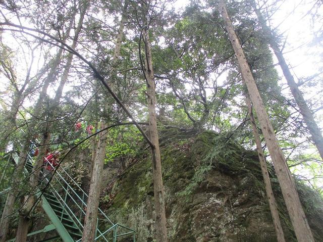 画像6: 4月26日に 「琴平丘陵から羊山公園」 ツアーに行ってきました!