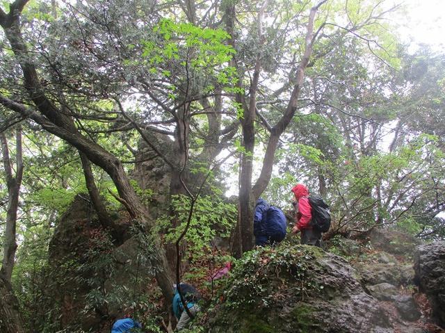 画像2: 4月26日に 「琴平丘陵から羊山公園」 ツアーに行ってきました!