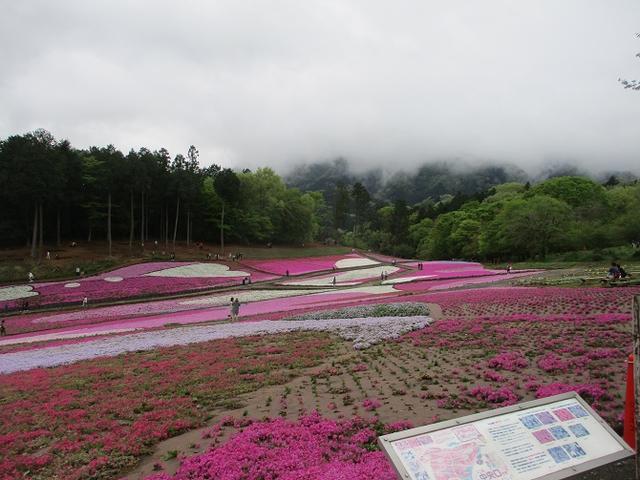 画像9: 4月26日に 「琴平丘陵から羊山公園」 ツアーに行ってきました!