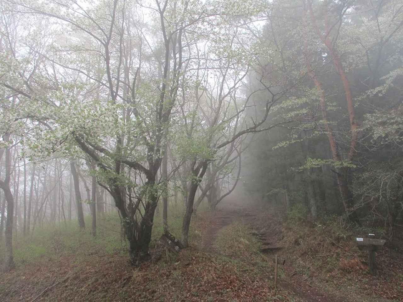 画像7: 本日は 秩父丸山 ツアーの下見のご報告です!