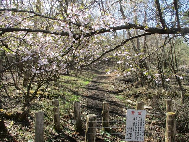 画像1: 【山旅会・登山ガイドこだわりツアー】岡田ガイドからの便り・籠坂峠から三国山ツアーの下見に行ってきました!