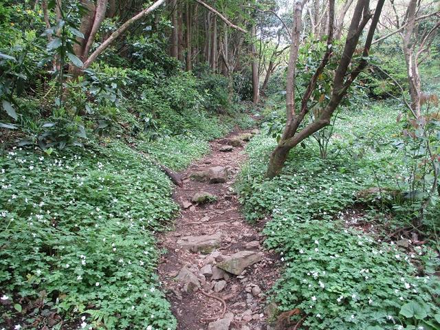 画像5: 5月の山旅会 西山峠から高尾山 ツアーの直前下見に行ってきました!