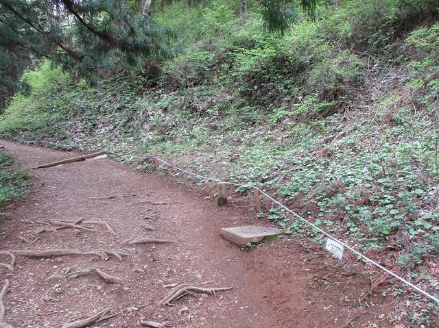 画像12: 5月の山旅会 西山峠から高尾山 ツアーの直前下見に行ってきました!