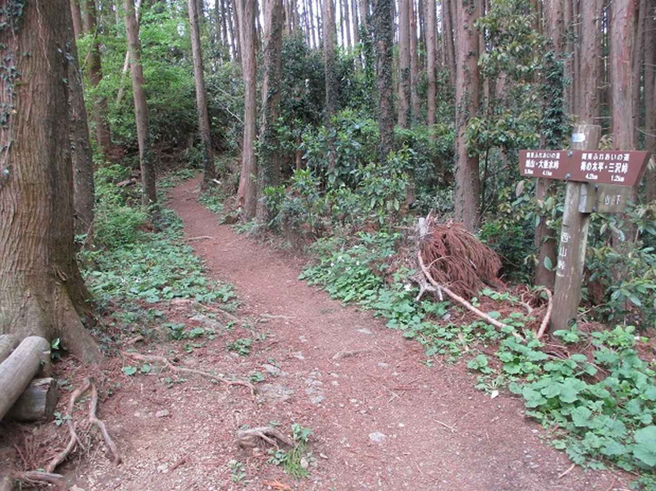 画像6: 5月の山旅会 西山峠から高尾山 ツアーの直前下見に行ってきました!