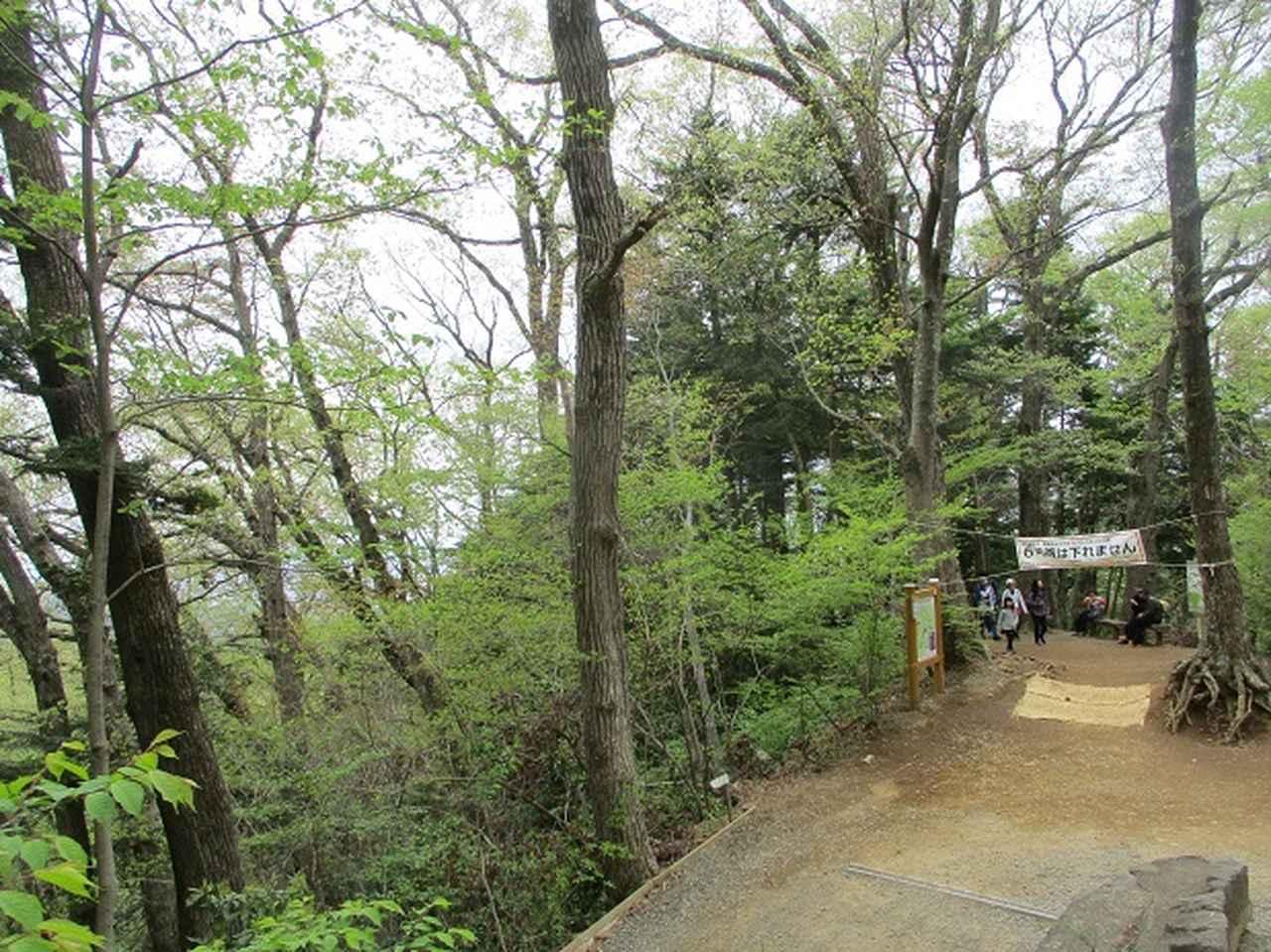 画像14: 5月の山旅会 西山峠から高尾山 ツアーの直前下見に行ってきました!