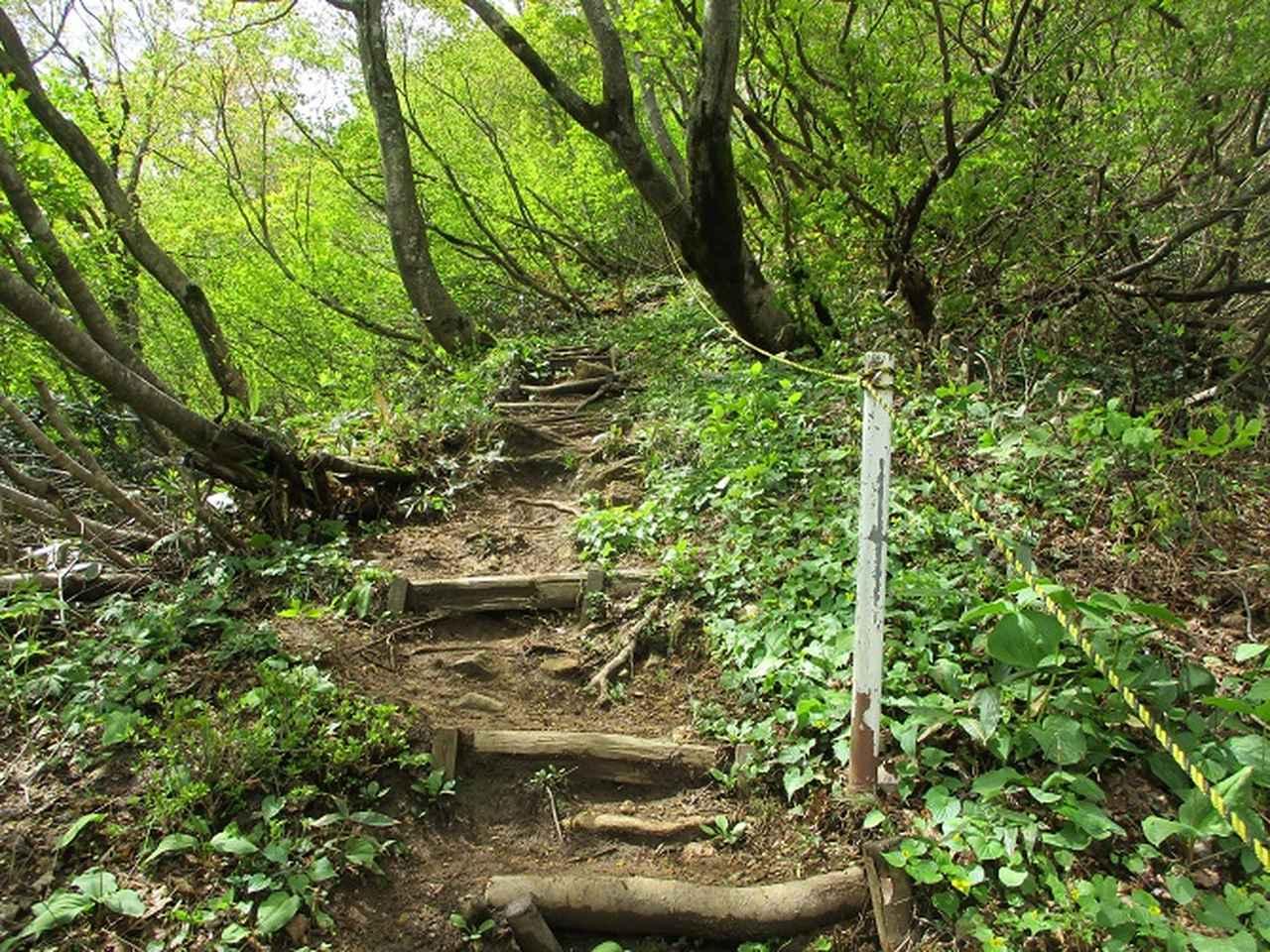 画像10: 5月の山旅会 「坂戸山と八石山」 の直前下見報告です!