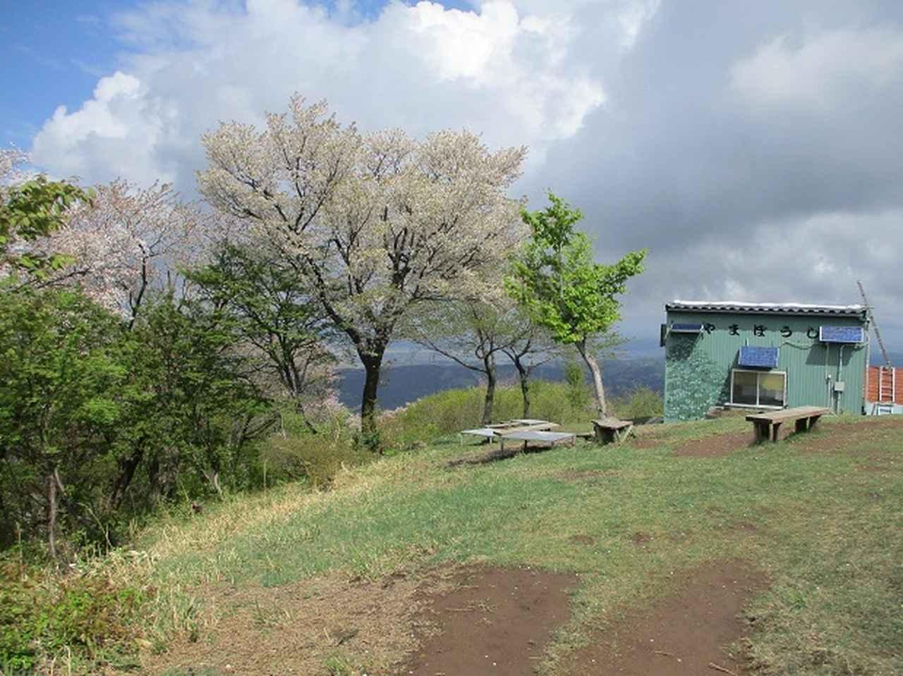 画像11: 5月の山旅会 「坂戸山と八石山」 の直前下見報告です!