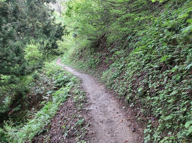 画像3: 5月の山旅会 「坂戸山と八石山」 の直前下見報告です!