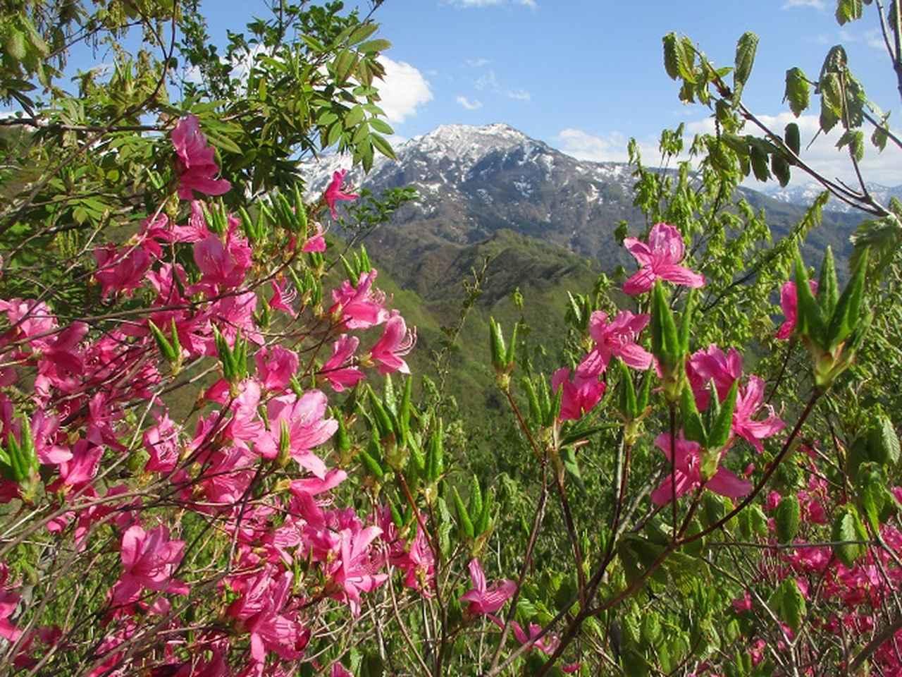 画像9: 5月の山旅会 「坂戸山と八石山」 の直前下見報告です!