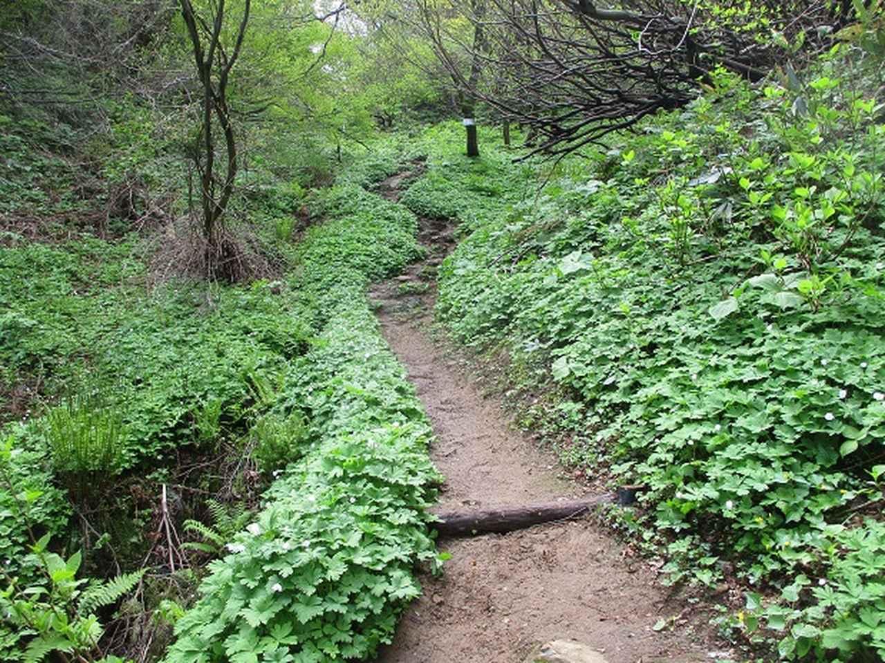 画像7: 5月の山旅会 「坂戸山と八石山」 の直前下見報告です!