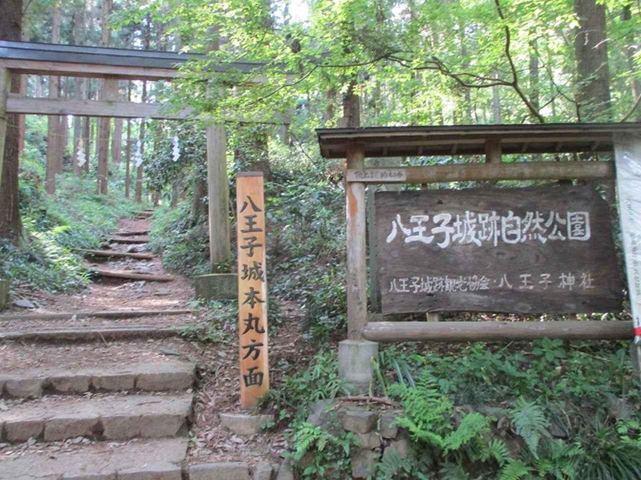 画像12: 5月5日に山旅会 「狐塚峠から八王子城址」 ツアーに行ってきました!