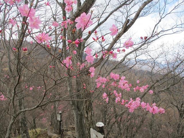 画像3: 5月の山旅会 「茶ノ木平から華厳の滝」 の下見に行ってきました!