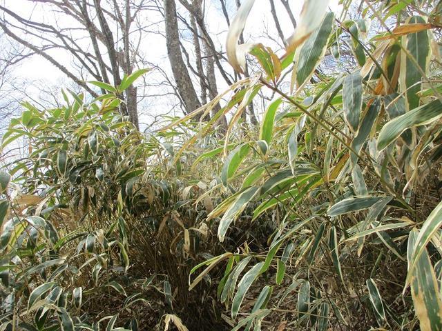 画像6: 5月の山旅会 「茶ノ木平から華厳の滝」 の下見に行ってきました!