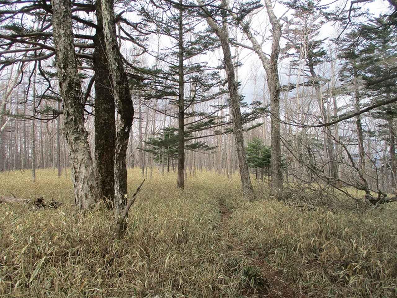 画像7: 5月の山旅会 「茶ノ木平から華厳の滝」 の下見に行ってきました!