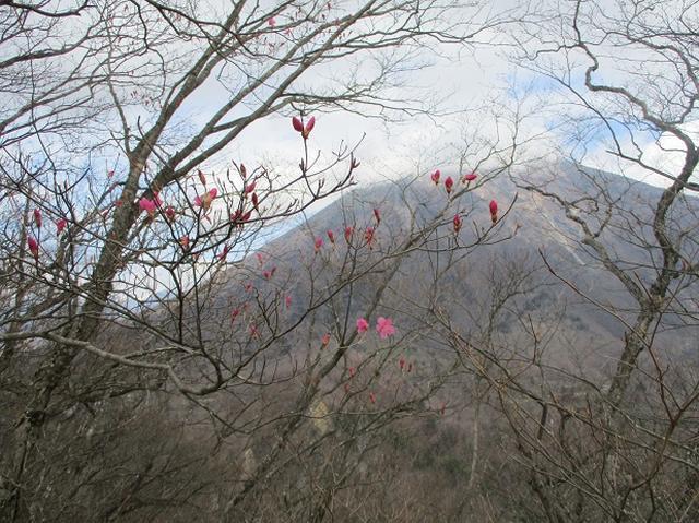 画像4: 5月の山旅会 「茶ノ木平から華厳の滝」 の下見に行ってきました!