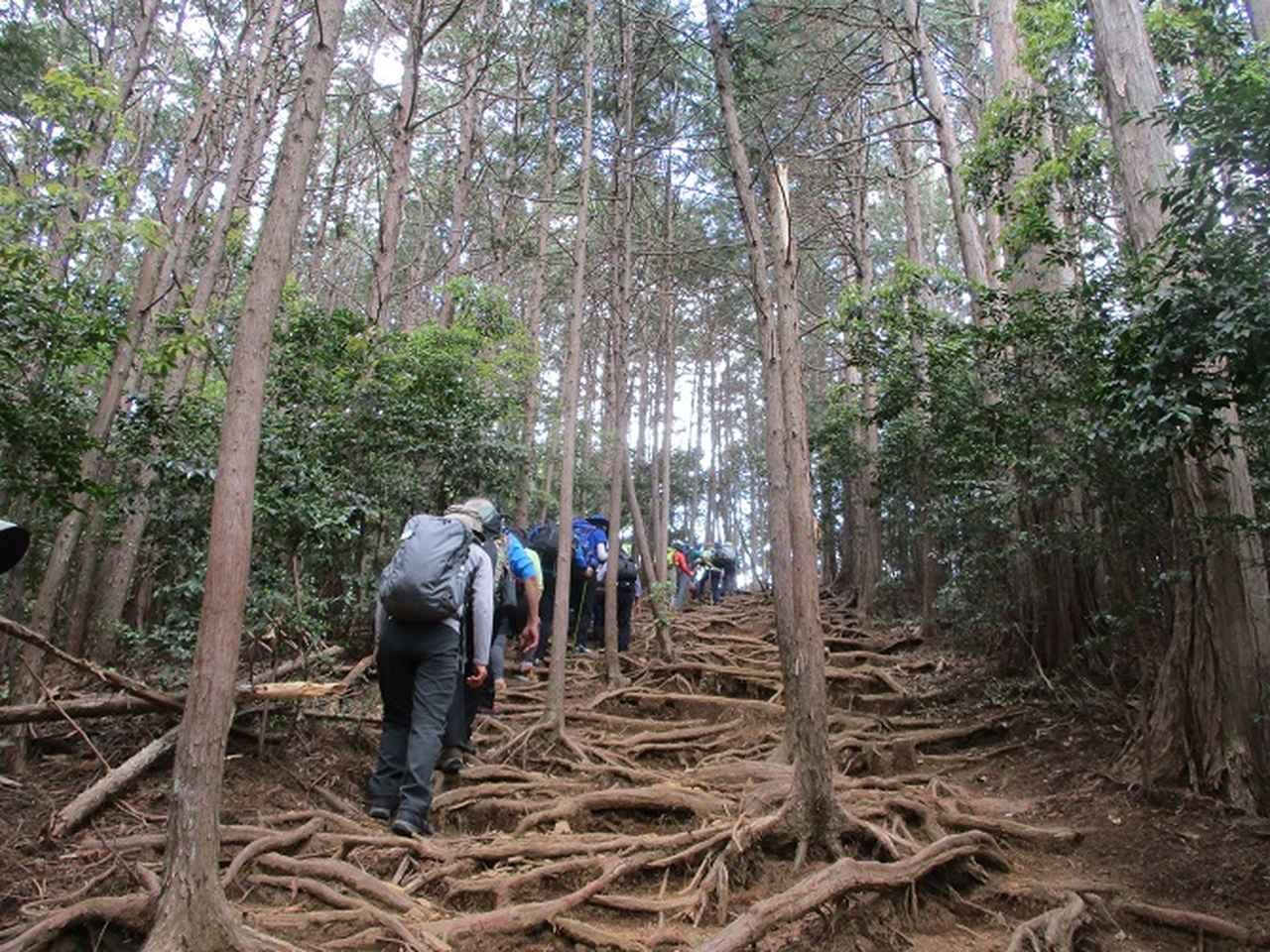 画像7: 5月4日に岡田ガイドのツアーで埼玉県の「越上山」へ行って来ました♪