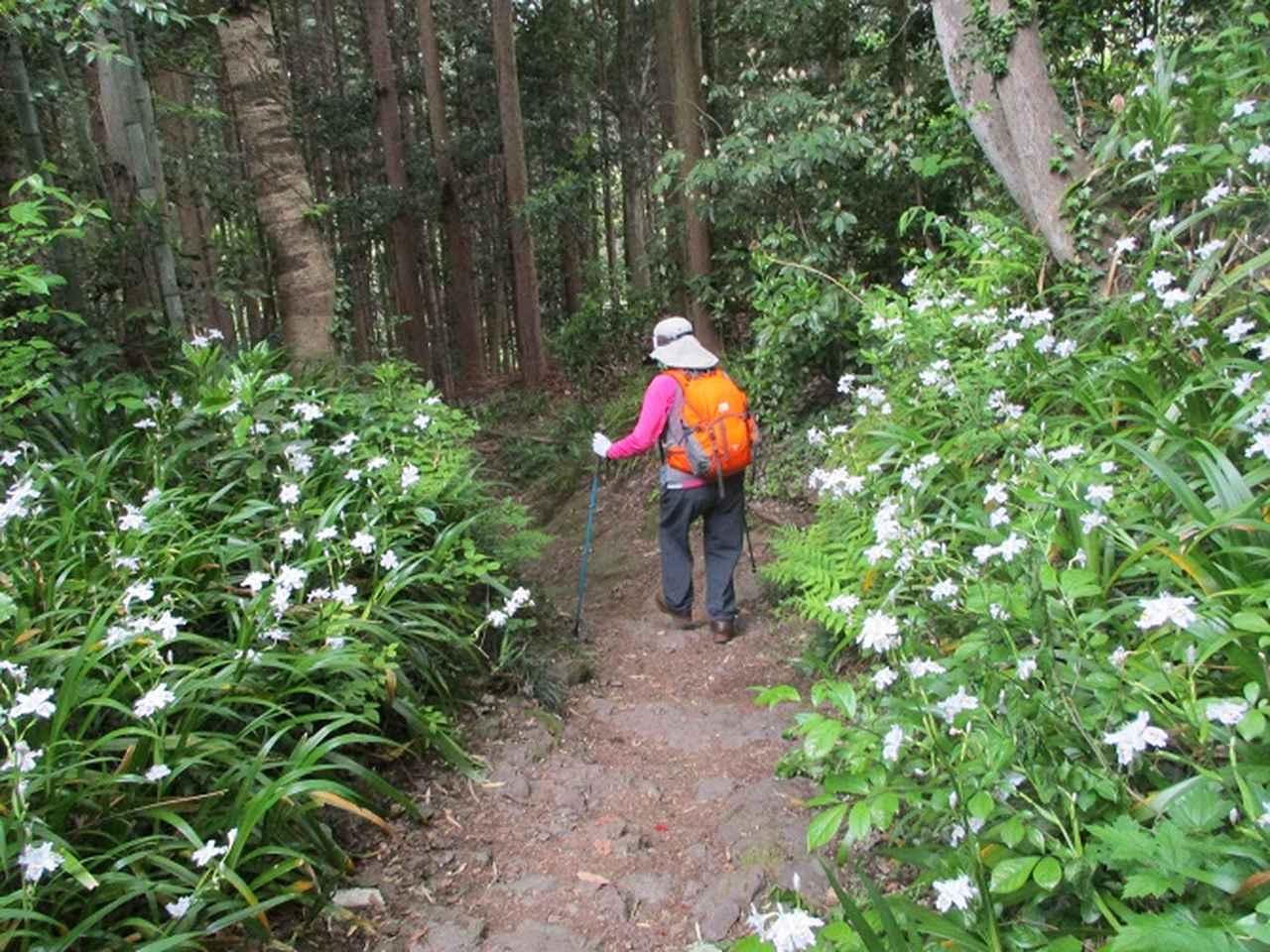 画像12: 5月4日に岡田ガイドのツアーで埼玉県の「越上山」へ行って来ました♪