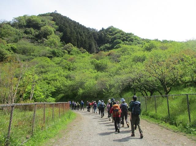 画像13: 5月4日に岡田ガイドのツアーで埼玉県の「越上山」へ行って来ました♪