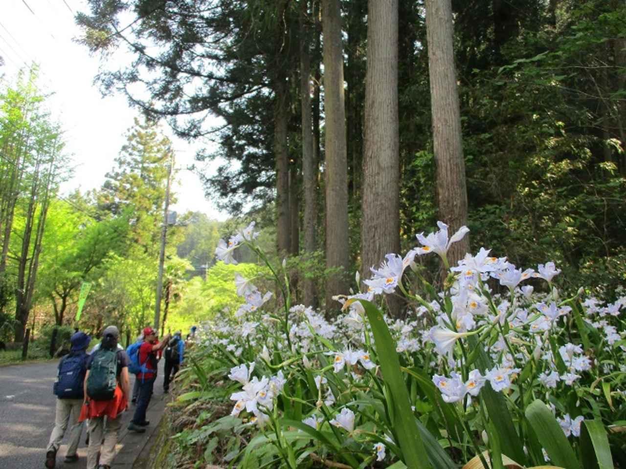 画像2: 5月4日に岡田ガイドのツアーで埼玉県の「越上山」へ行って来ました♪